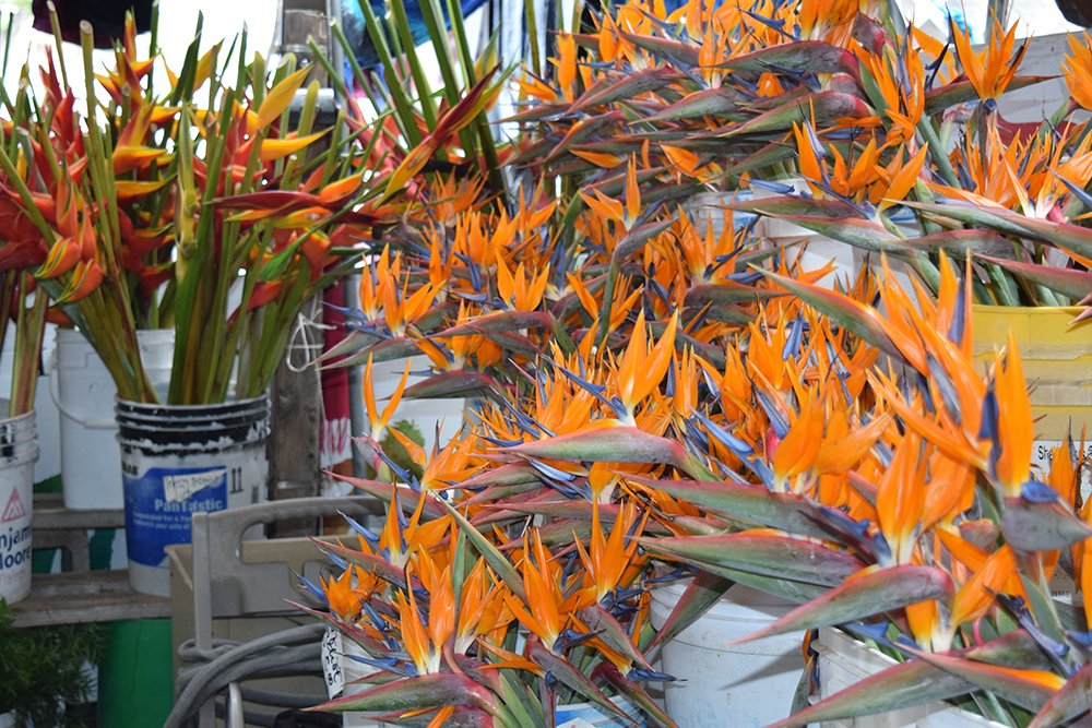 Kona Farmers Market, Flowers, Exotic Estates, Vacation Rentals