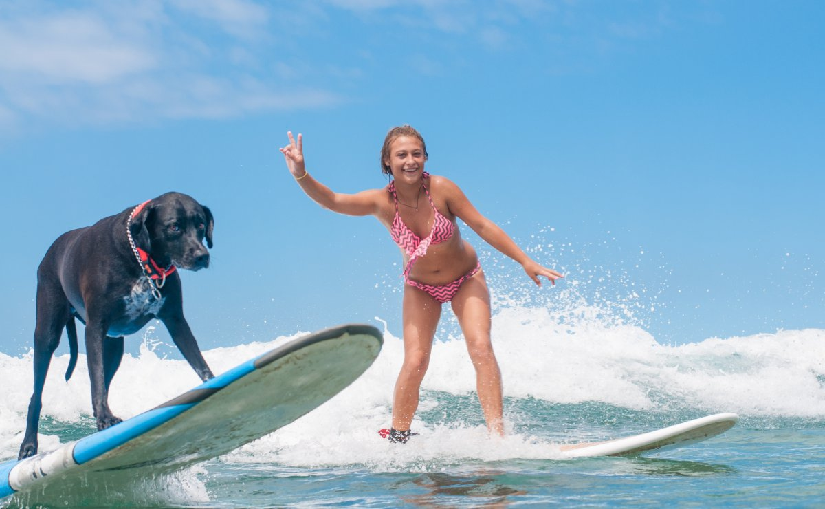 Surf Dog, Surf Girl, Maui Surf Lessons, Girl Surfer, Surf Lessons, Girls Surf Lessons, Exotic Estates, Vacation Rentals