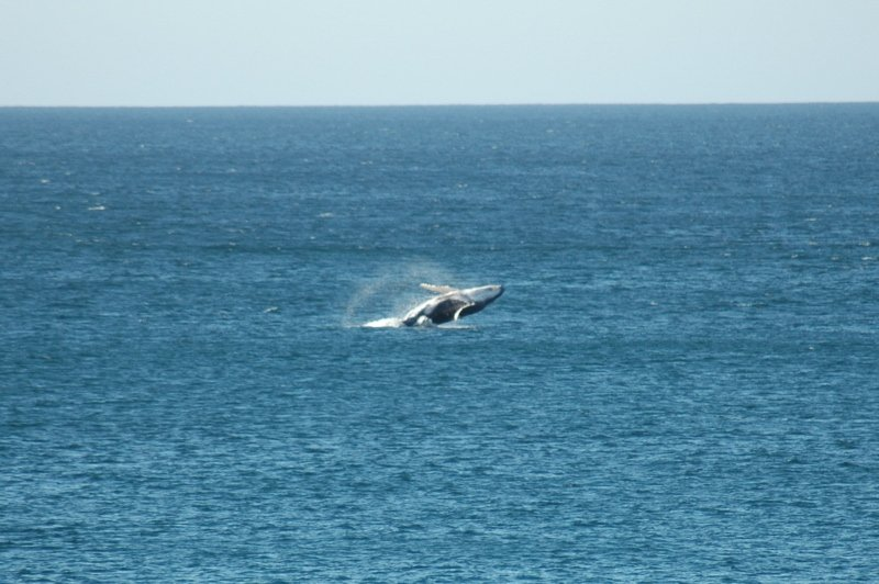 Cabo Whale Watching, Winter in Cabo, Cabo Christmas, Exotic Estates, Vacation Rental