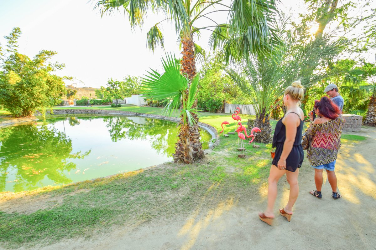 Farm View, Flora Farms, Farm to Table, Organic Dining San Jose Del Cabo, Exotic Estates, Vacation Rentals