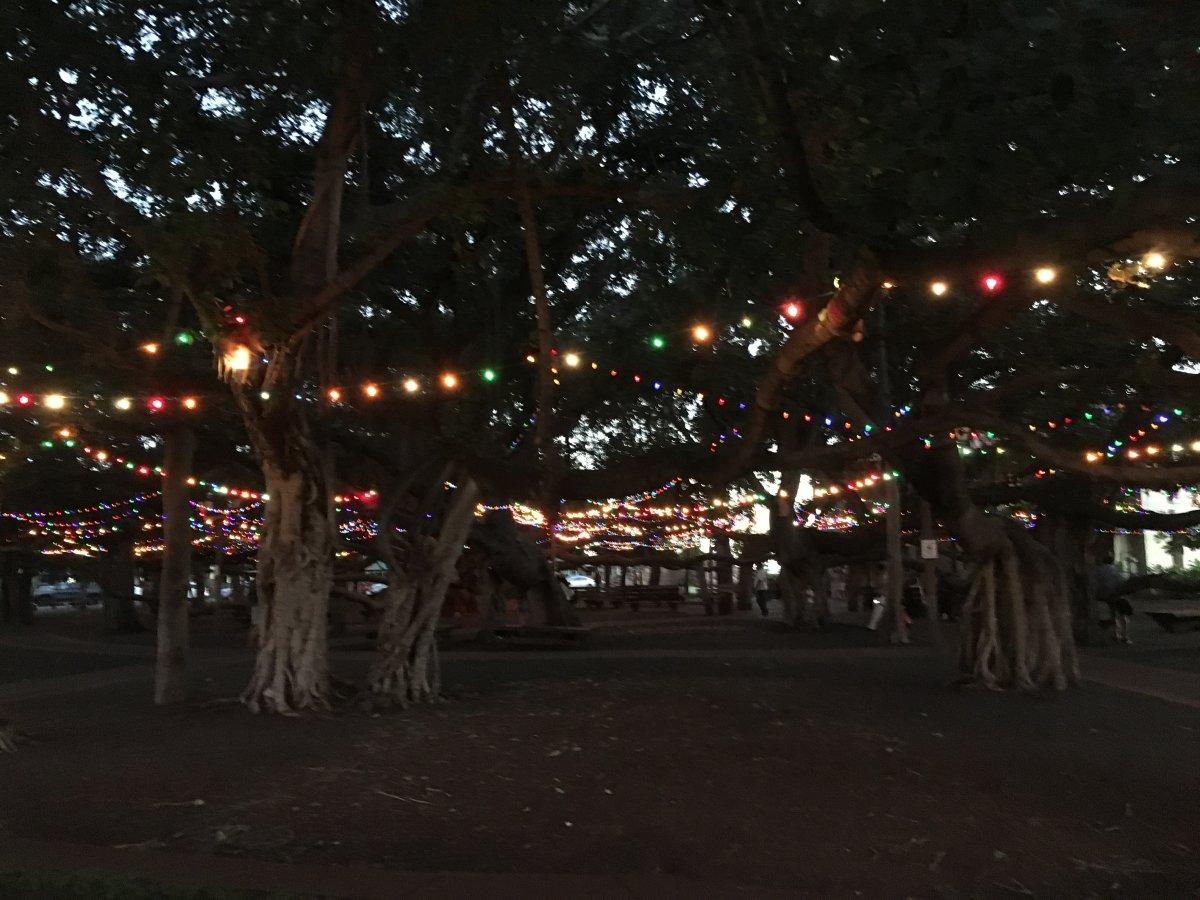 Lahaina Banyan Tree - John Di Rienzo