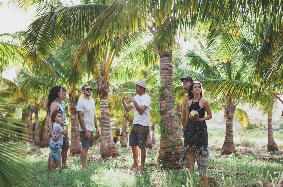 Exotic Estates Maui Vacation Rentals, Punakea Palms Coconut Farm Tour