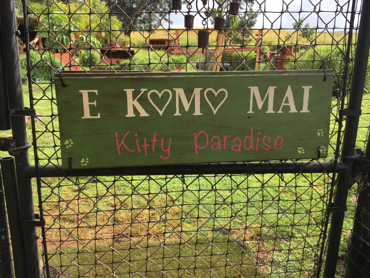John Di Rienzo - Lanai Cat Santuary - Entrance