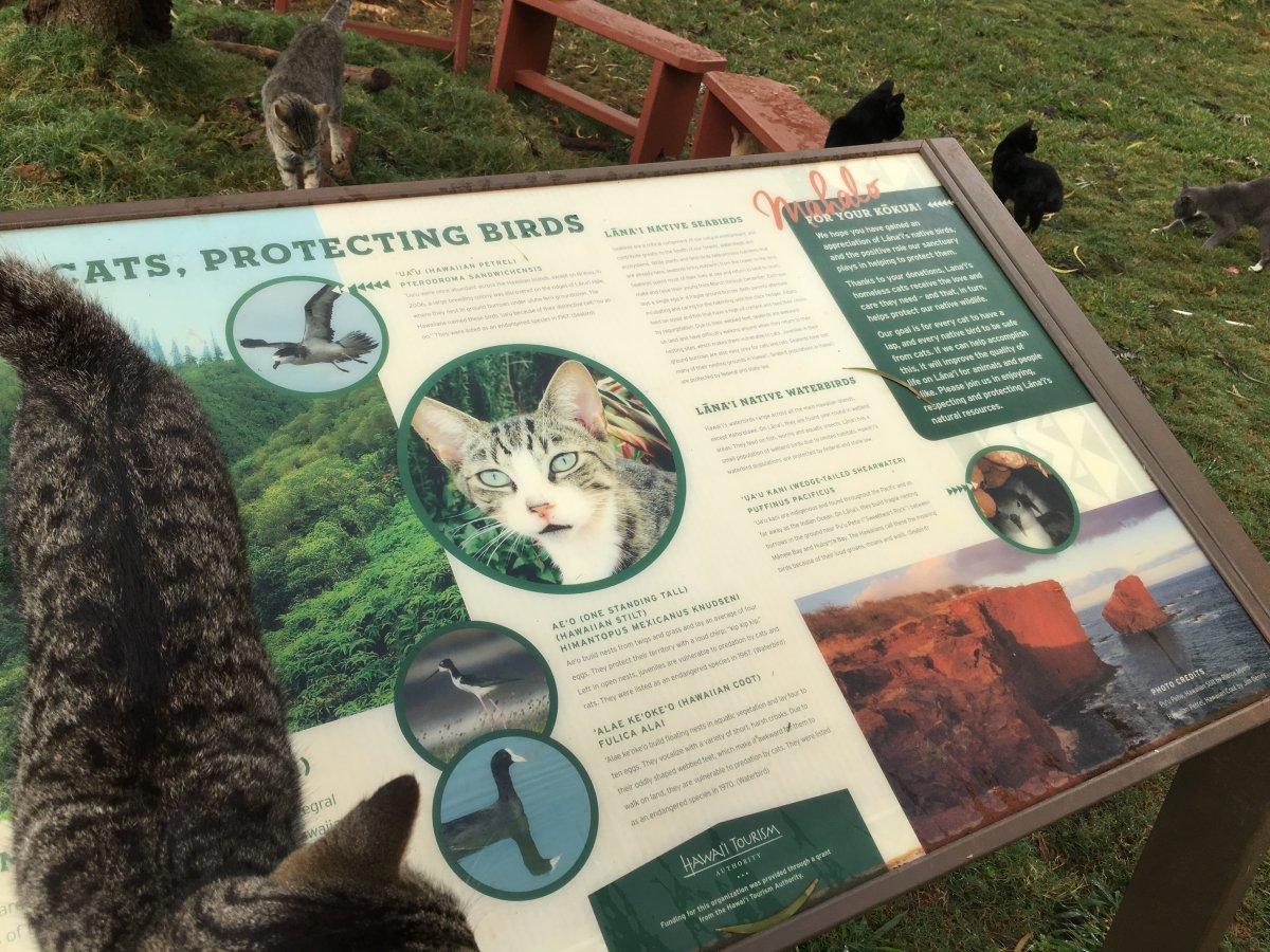 John Di Rienzo - Lanai Cat Santuary - Conservation