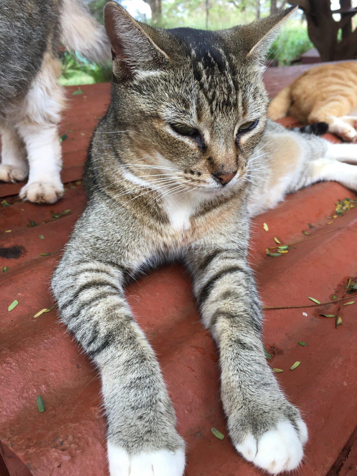 John Di Rienzo - Lanai Cat Santuary - Queenie