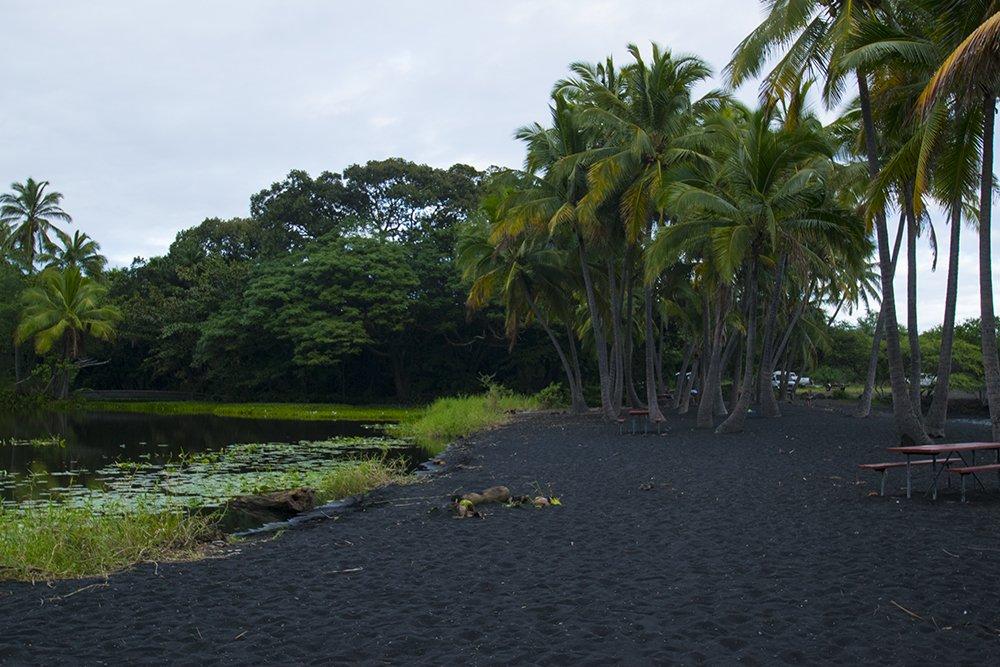 Punaluu Black Sand Beach - Lily Pads - John Di Rienzo