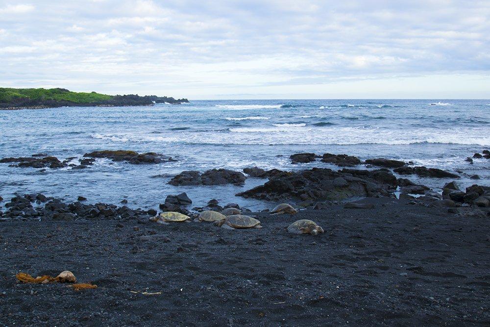 Punaluu Black Sand Beach - Hawaiian Green Sea Turtles - John Di Rienzo