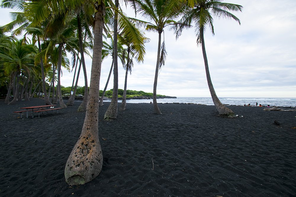 Punaluu Black Sand Beach - Palms - John Di Rienzo