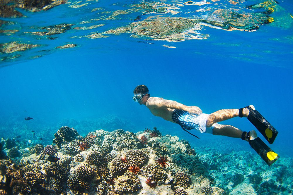 Hawaii Snorkel Reef - Exotic Estates