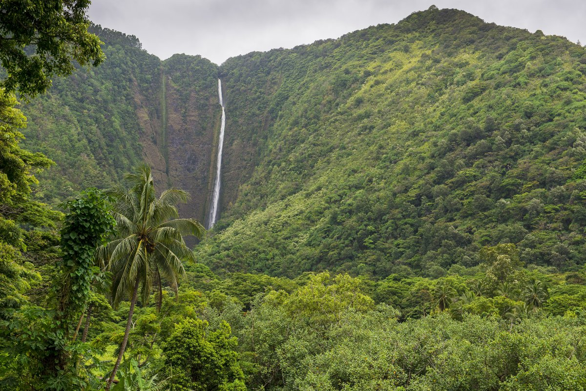 Waipio Valley Big Island Waterfalls - Exotic Estates