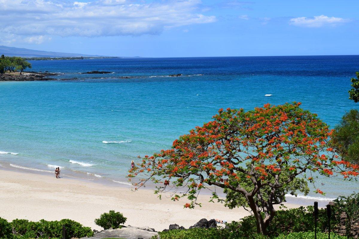 Big Island of Hawaii - Exotic Estates - by John Di Rienzo