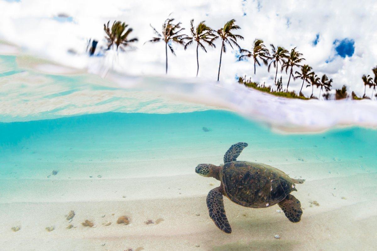 Sea Turtle Exotic Estates