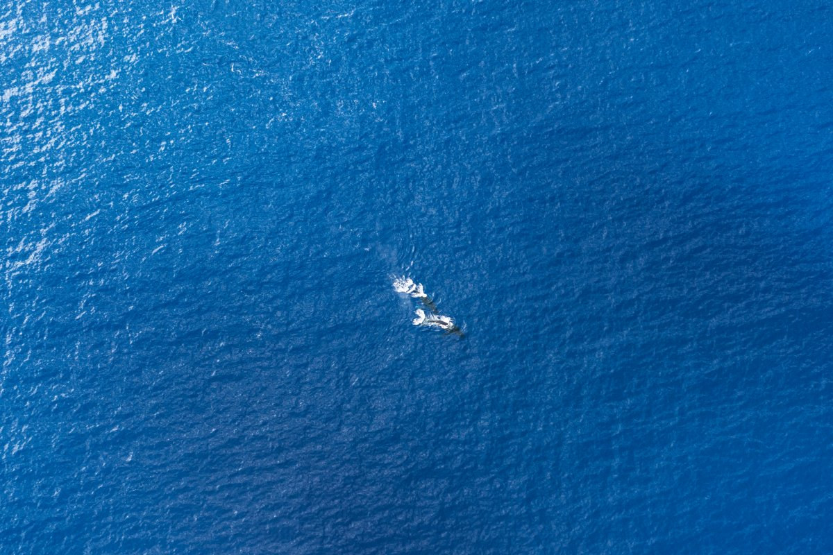 Whales Seen from Big Island Helicopter Tour - Shanon Searls