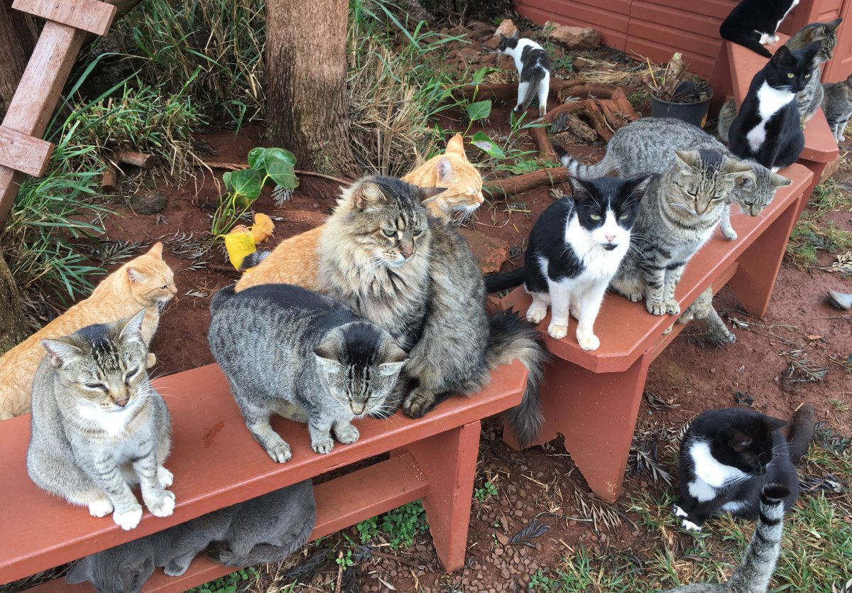 Lanai Cat Sanctuary - John Di Rienzo