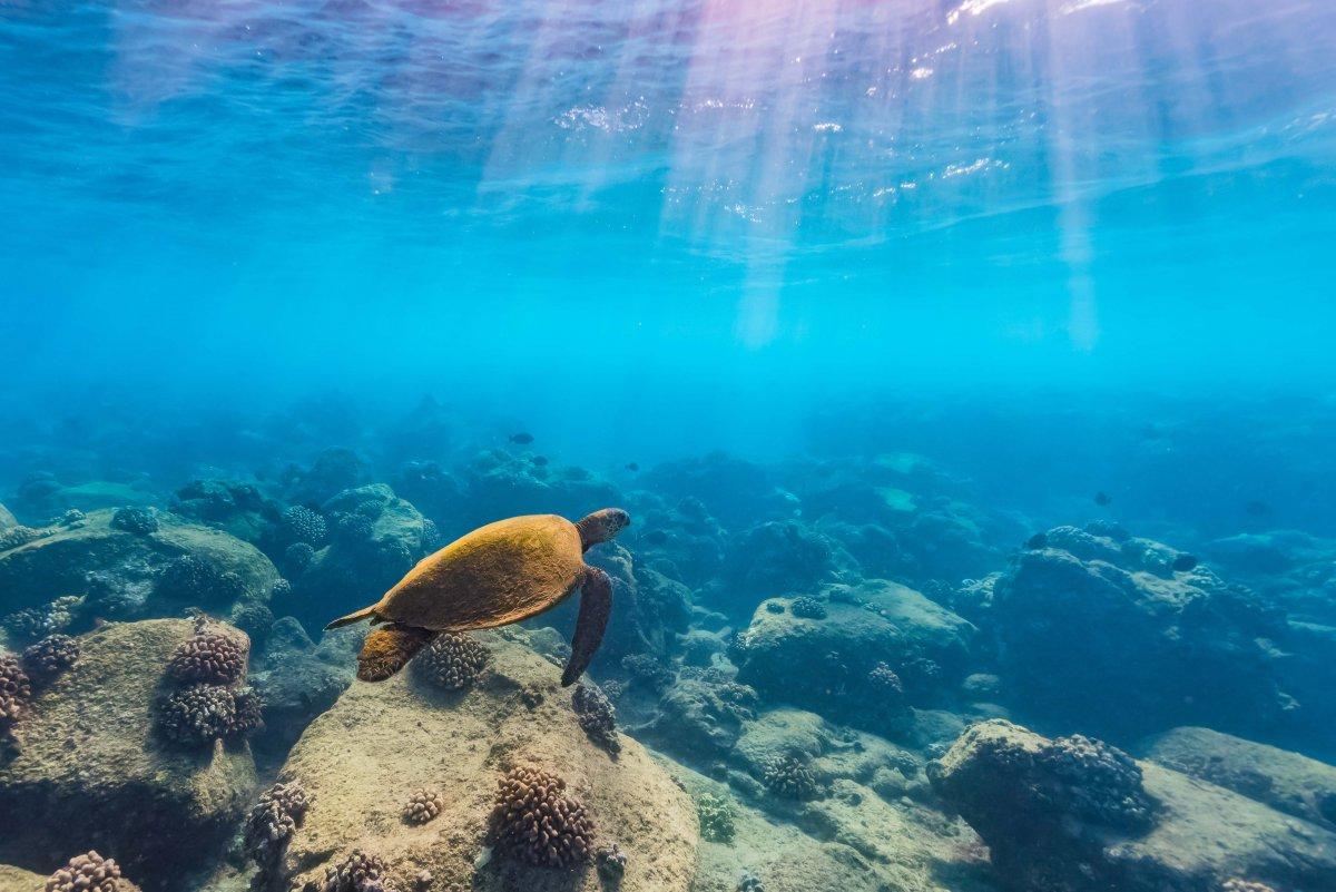 Snorkel Tropical Fish