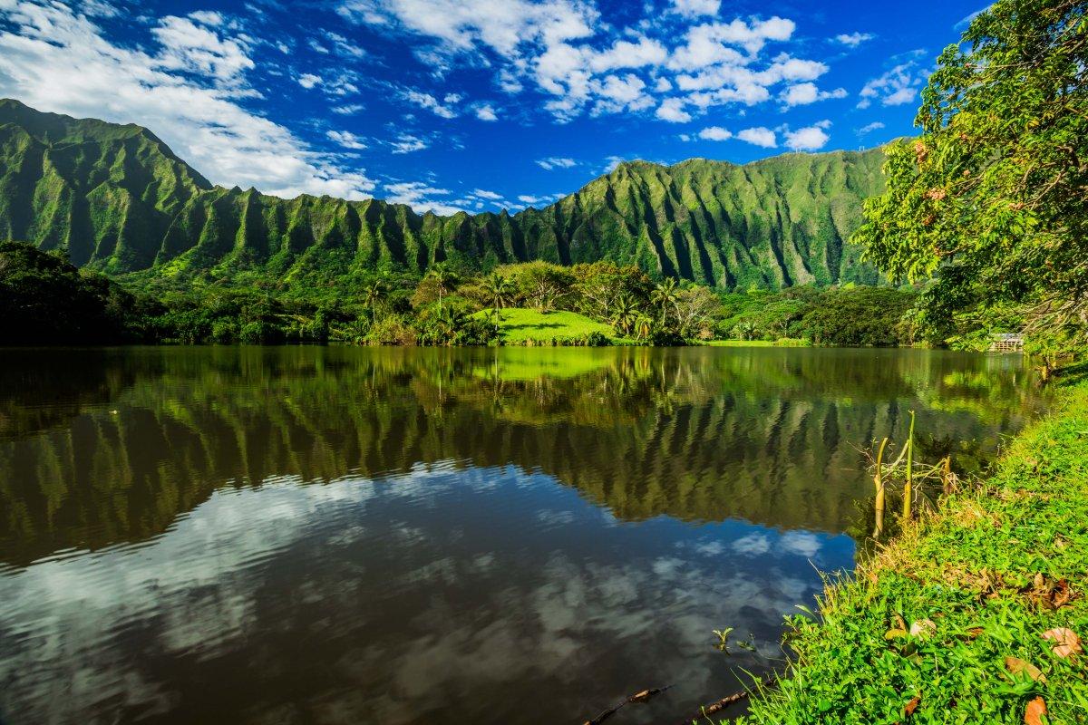 Botanical Garden Oahu