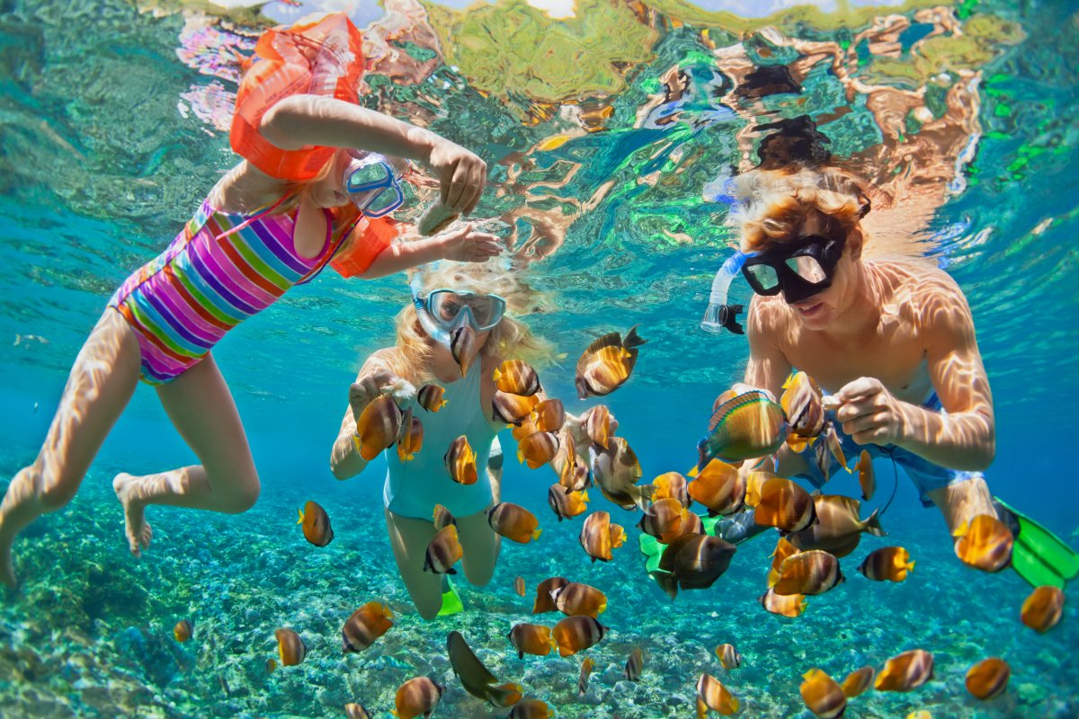 Snorkeling with School of Fish
