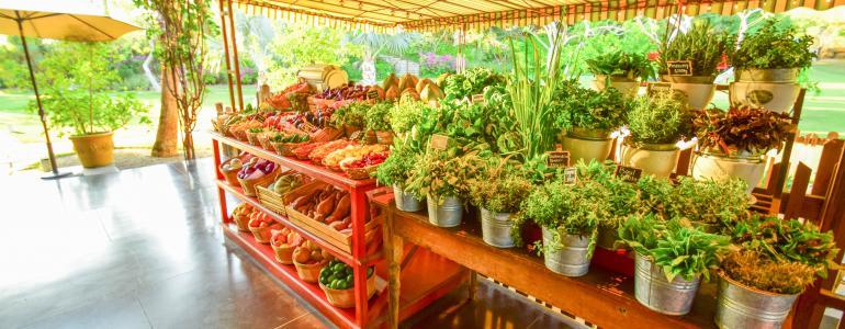 Farm to Table in San Jose del Cabo at Flora Farms