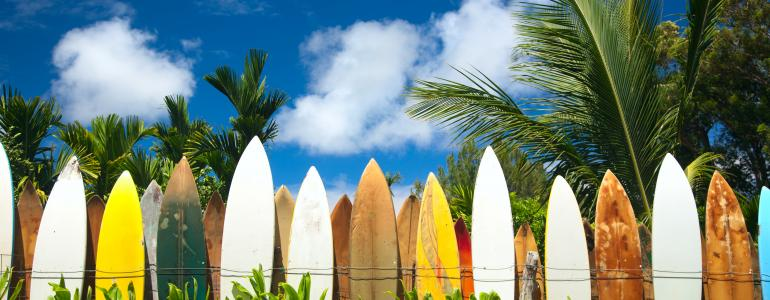 Surf's Up – Maui Edition