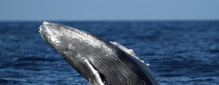 Hawaii Whale Watching Guide