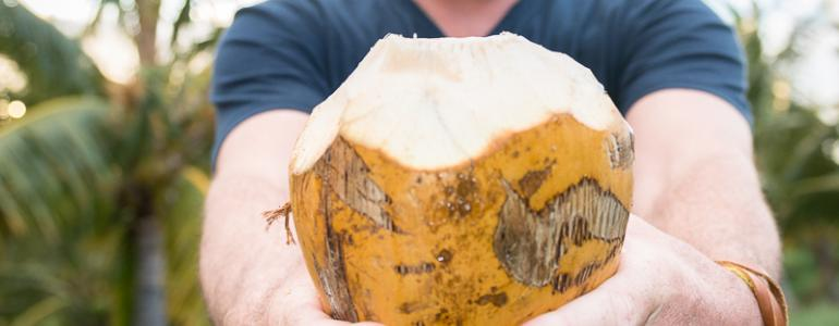 We are Coco-NUTS for the Punakea Palms Coconut Farm Tour!